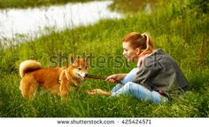 Girl talks to dogs Shiba Inu in Spring Park. Walking with a pet. Pedigree dog. Walking dogs. Dog happiness.