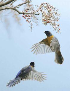 The Beauty of Bird Photography by John & Fish