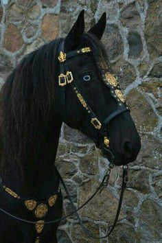 Holy crap❤ tbh blue creep me out a bit but they still look cool lol and the bridle is beautiful and I love all black horses. Also even with boys I love brown eyes beautiful horses Horse Bridle, Horse Gear, Friesian Horse, Andalusian Horse, Arabian Horses, All The Pretty Horses, Beautiful Horses, Animals Beautiful, Cute Animals