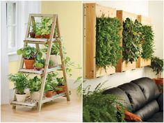Plantas para espaços fechados – Ideias Diferentes
