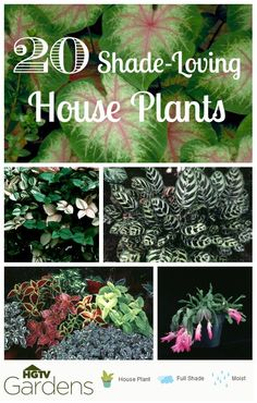20 Gorgeous Shade-Loving House Plants<--found these using the uber easy HGTVGardens Plant Finder