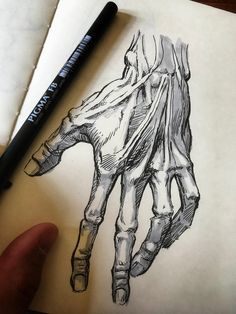 A little anatomy study. Skeleton Drawings, Dark Art Drawings, Pencil Art Drawings, Art Drawings Sketches, Hand Drawings, Drawing Faces, Art Illustrations, Drawing Art, Drawing Tips