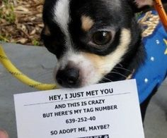 Hey, I just met you and this is crazy...