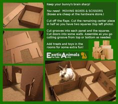 Bunny Maze - DIY Bunny Rabbit Toys that are Cheap . Bunny Maze – DIY Bunny Rabbit Toys that are Cheap and Easy to Make. Awesome for all sorts of small animals. Hamsters, Rodents, Rabbit Toys, Pet Rabbit, Diy Bunny Toys, Pet Bunny Rabbits, Indoor Rabbit, Bunny Cages, Rabbit Cages