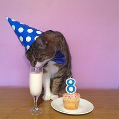 We all know not to serve our cats booze. (For those of you that were not aware, here is a disclaimer: do not serve your cats booze.) But there are a few beverages cats can safely drink. birthday party ideas for cats Birthday Cake For Cat, Animal Birthday, Birthday Cats, Birthday Ideas, Happy Birthday, I Love Cats, Crazy Cats, Cool Cats, Kitty Party