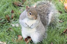 Repelling Squirrels With Peppermint Oil Home Improvement