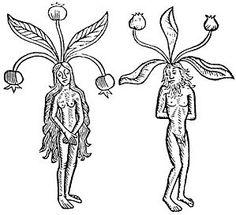 Herbologia Mística: A Magia da Mandrágora