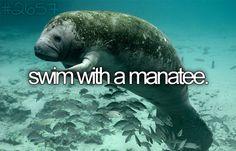 Eu quero nadar com o peixe-boi.