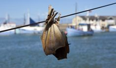 """Hirtshals fiskefestival, årligt event, en del af """"Smagedage Nordjylland""""."""