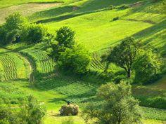 Gathering the Hay, Romania