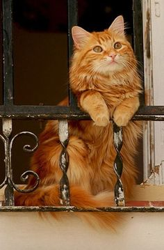 I absolutely love this orange cat.