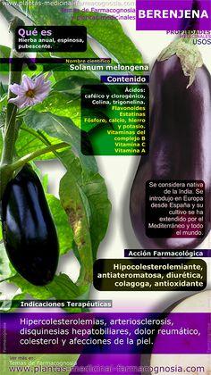 Infografía. Resumen de las características generales de la planta de Berenjena. Propiedades, beneficios y usos medicinales más comunes de la Berenjena.