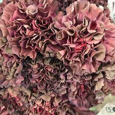 'Copper Extasis' Carnation Colorful Flowers, Beautiful Flowers, Flower Colors, Carnation Colors, Floral Wedding, Wedding Flowers, Flower Names, Ornamental Plants, Carnations