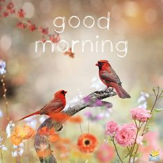 Good morning pic with little birds. Good Morning Beautiful Images, Good Morning Images Hd, Good Morning Picture, Good Morning Flowers, Good Morning Good Night, Morning Pictures, Beautiful Birds, Good Morning Greetings, Good Morning Wishes