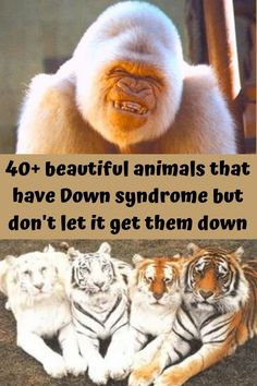 This may come as a surprise to you, but humans aren't the only species to have Down syndrome.
