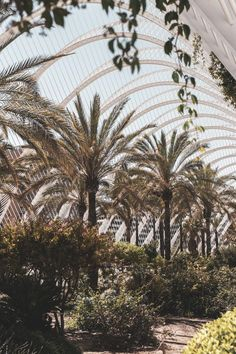 palm tree garden in valencia, spain Provence, Nature Photography, Travel Photography, Travel Drawing, Spain Travel, Vacation Destinations, Vacations, Travel Photos, Travel Tips