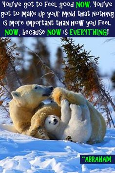 Now is everything! Animals And Pets, Baby Animals, Funny Animals, Cute Animals, Wild Animals, Beautiful Creatures, Animals Beautiful, Love Bear, Tier Fotos