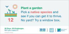 #30x30Challenge: Plant a garden