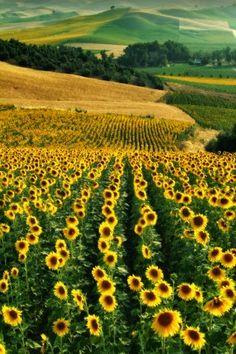 pour les champs de tournesols et ceux de lavande, je partirais bien vivre dans le sud... Magnifique.