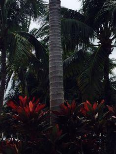 Palmera tronco Miami