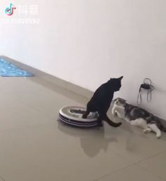 Roomba, is not the time! GIF