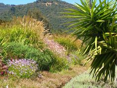 Insectaries and IPM at Benziger Winery - an article by Master Gardeners
