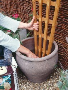 Support a Garden Trellis   How to Grow Flowering Vines in Containers