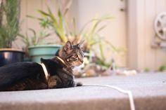 awesome Sonntags Mit Tabs die Katze, Make-up und Beauty Blog-Maskottchen, Vol. 396