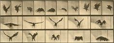 Animation: Eadweard Muybridge's Photography of Motion