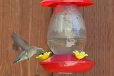 Homemade Hummingbird Nectar (Food Sugar Water Ratio) Homemade Hummingbird Nectar, Homemade Hummingbird Food, Sugar Water For Hummingbirds, How To Attract Hummingbirds, Nectar Recipe, Stencils, Post Workout Food, Red Food Coloring, Humming Bird Feeders