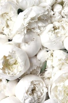 White Peonies//