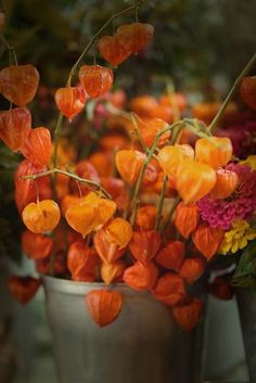 "The Colour of Autumn ~ Orange ""Chinese Lanters"" (Physalis) ...."