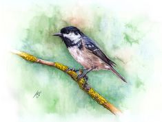 Bird painted by Ali Naseri size: Watercolour Painting, Ali, Bird, Animals, Instagram, Animales, Animaux, Birds, Ant