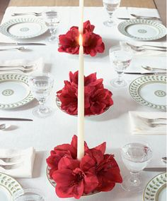 Poinsettia elegance