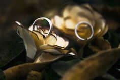 Wedding Bands - Engagement Rings - Wedding Photography Alex Grigore Nature #weddings #weddingphotography Wedding Engagement, Wedding Bands, Engagement Rings, Silver Rings, Wedding Photography, Weddings, Nature, Jewelry, Enagement Rings