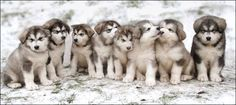 Awe how adorable, I love it!! Snow pictures are always the best, especially when there are puppies!!