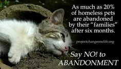 DEPLORABLE! Animals deserve LOVE, they are NOT disposable OBJECTS!