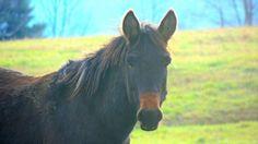 ASPCA recognizes Northeastern Pennsylvania's Indraloka Animal Sanctuary
