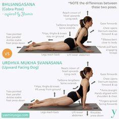 Les différences entre bhujangasana (posture du cobra) et urdhva mukha svanasana (chien tête en haut)