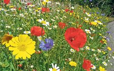 A guide to lazy gardening: how to create a low-maintenence space - Telegraph