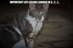 20+ Funny Cat Pictures