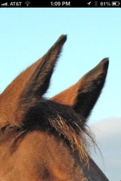 Side view of ears Horse Ears, Side View, Giraffe, Sculpting, Horses, Animals, Giraffes, Sculpture, Animales