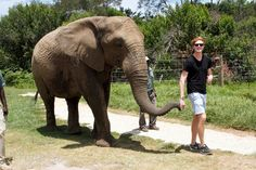 Josh-Pieters-walking-an-elephant-in-Plettenberg-Bay-South-Africa-Elephant-Sanctuary-The-Crags-Plettenberg-Bay.jpg (960×640)