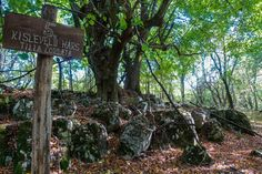 A Bakony eldugott sziklakertjében több csoda is vár Fruit, Plants, Plant, Planting