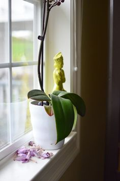 Do you throw your orchids out after they drop their flowers? FOR SHAME! Here is what you do: