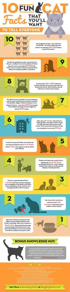Just under half the number of cat owners do not know what their cat gets up to each day and how that have been socialised. These figures are not a shock as a massive 36% of domestic cats are obtained from rescue centres and 8 % are strays that have been taken in. This infographic shows 10 more fun facts about cats.