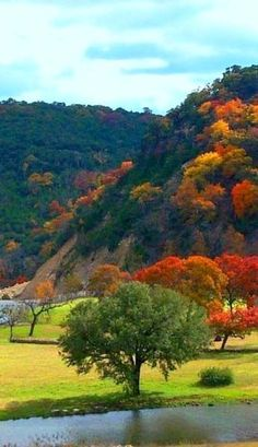 The Texas Hill Country is not as famous as New England for fall color, but we do have it. Like an autumn colors in Lost Maples State Natural Area near San Antonio. Texas Hill Country, Country Fall, West Texas, Cool Places To Visit, Places To Travel, Vacation Places, Family Vacations, Vacation Destinations, Family Travel
