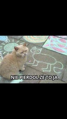 Humor, Cats, Animals, Gatos, Animales, Kitty Cats, Animaux, Humour, Moon Moon