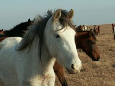 Multiple wild horses were found dead of dehydration, after someone sabotaged…