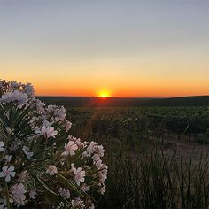 Celestial, Sunset, Outdoor, Agriculture, Roses, Outdoors, Sunsets, Outdoor Games, The Great Outdoors